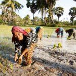 Cambodia_CNT_24oct12_rex_b-150x150 Camboya